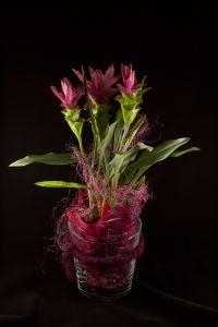 Blumenstöcke